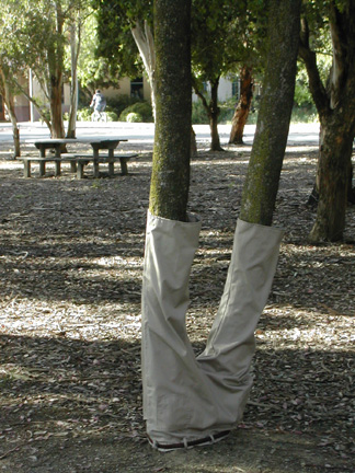 Pants On a Tree
